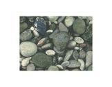 MOQUETTE IMPRIMEE • Galets - Rouleau de 1,5 m x 30 ml soit 45 m2 Bfl-S1-textile